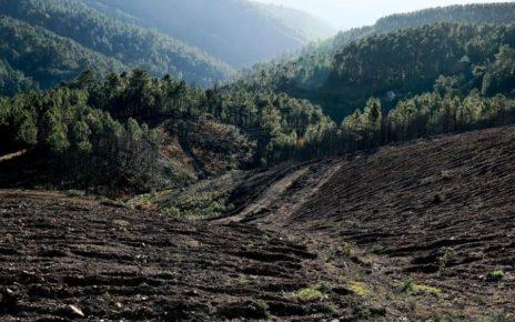 ibge aumenta terra arrendada radargeral.com site noticias de linhares es