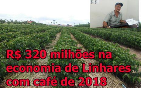 Maior produtor de café do norte do es radargeral site noticias de linhares es