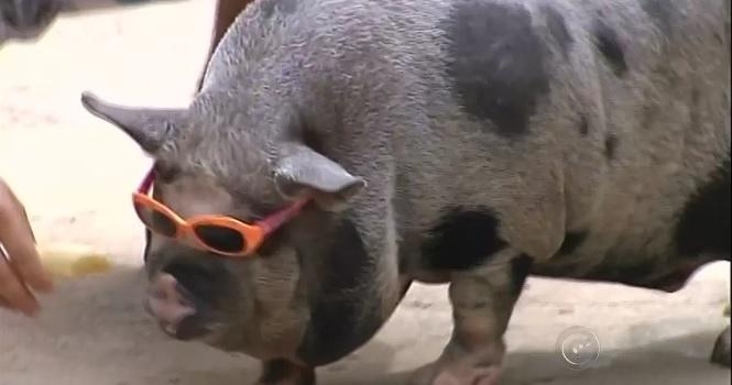 pessoas com espírito de porco foto internet pj colunista linhares radargeral