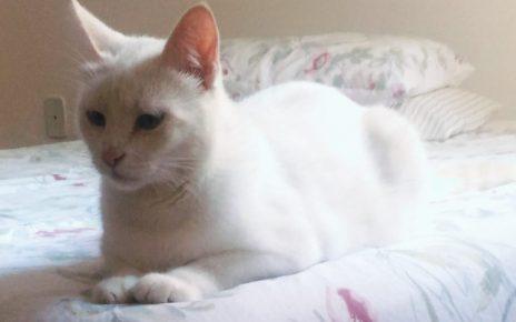 seu bicho radargeral.com gatinhos