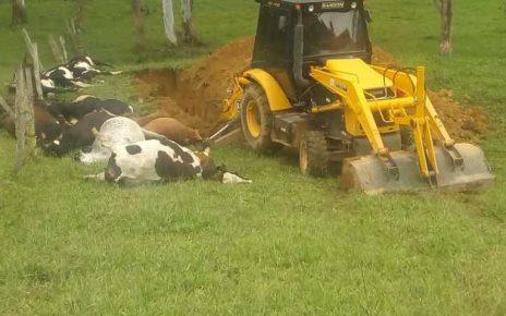 Fio de alta tensão mata 19 cabeças de gado em Dores do Rio Preto